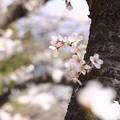 写真: 儚き白昼夢 (2)