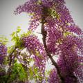 写真: 近所のフジカラー_edited_3