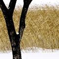 写真: 冬の原