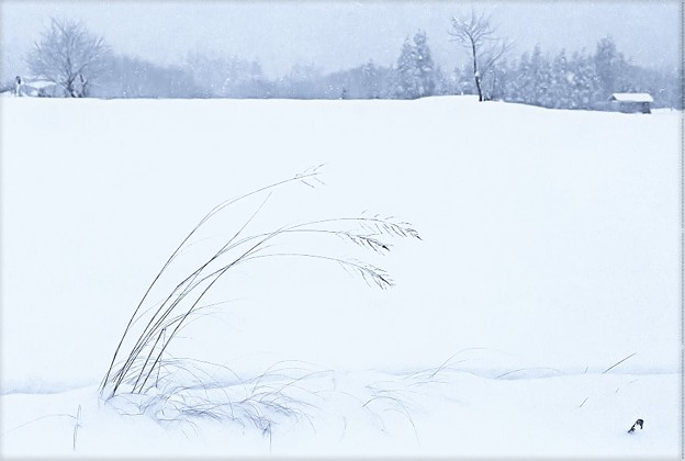 写真: 寒い朝