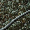 写真: 雪の樹