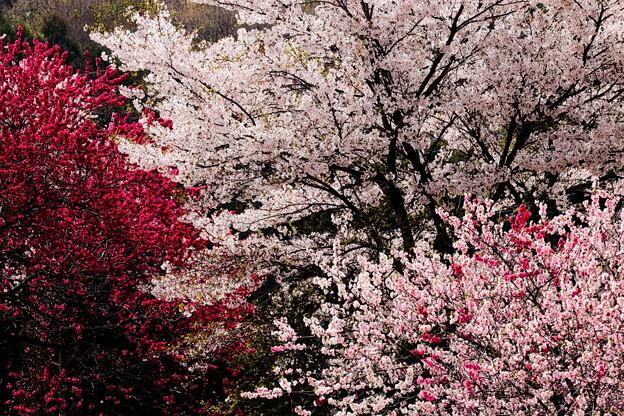 Photos: 春の宴