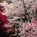 写真: 春の宴