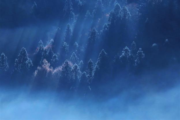 森林の朝霧