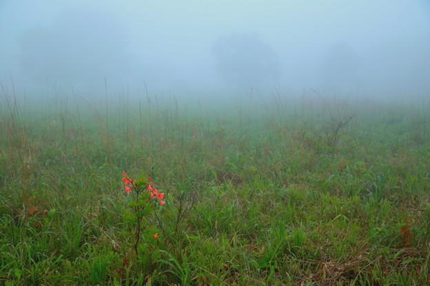 写真: 霧霞む原
