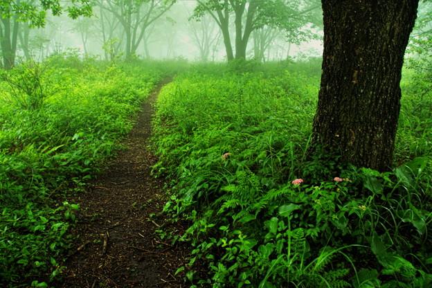 写真: 朝の山道