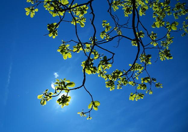 写真: 緑葉映える