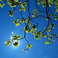 Photos: 緑葉映える