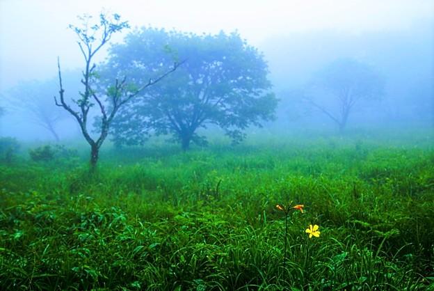 花咲く霧の朝