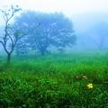写真: 花咲く霧の朝