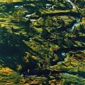 写真: 朝の湿原