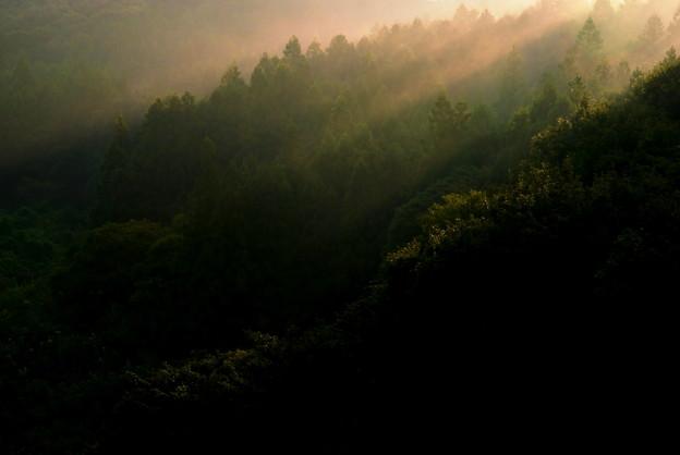 写真: 朝光射す