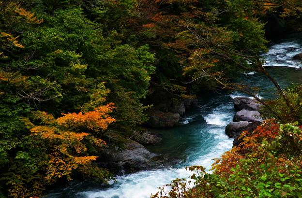 写真: 秋の渓流