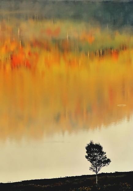 写真: 湖畔の彩