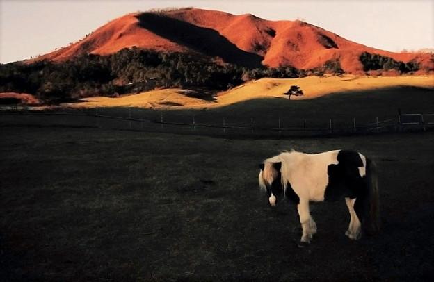 写真: 秋の牧場