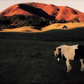 Photos: 秋の牧場