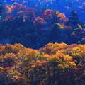 写真: 彩る秋
