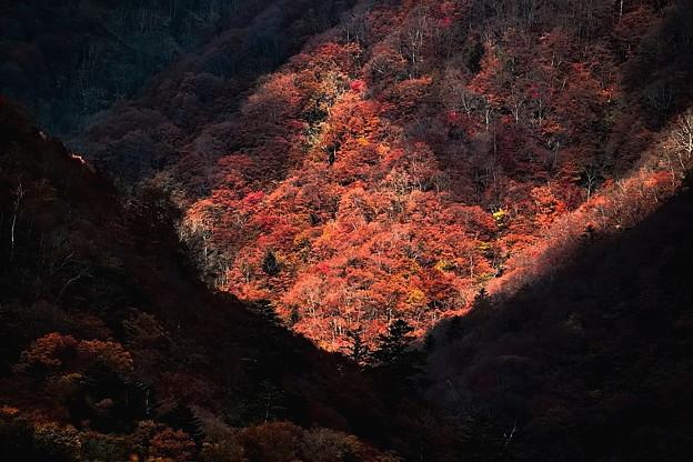写真: 光射す秋