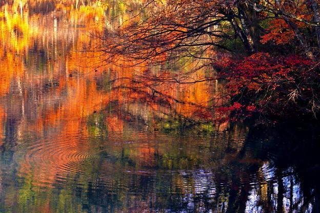 Photos: 湖面の彩