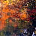 写真: 湖面の彩