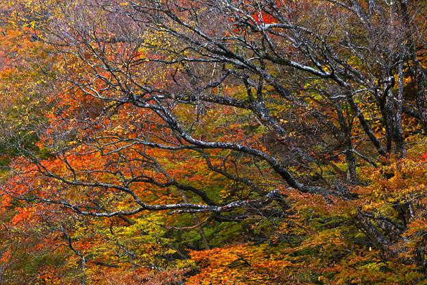Photos: 秋深まる