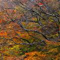 写真: 秋深まる
