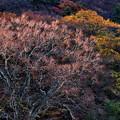 写真: 晩秋の木々