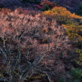 Photos: 晩秋の木々