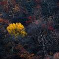写真: 山間に彩る