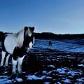 写真: 冬の牧場