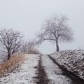 写真: 雪の道