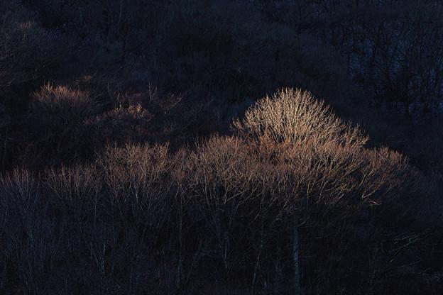 Photos: 冬の寸光
