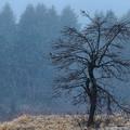 Photos: 細雪