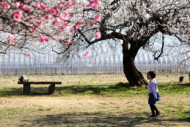 Photos: 梅樹の下で