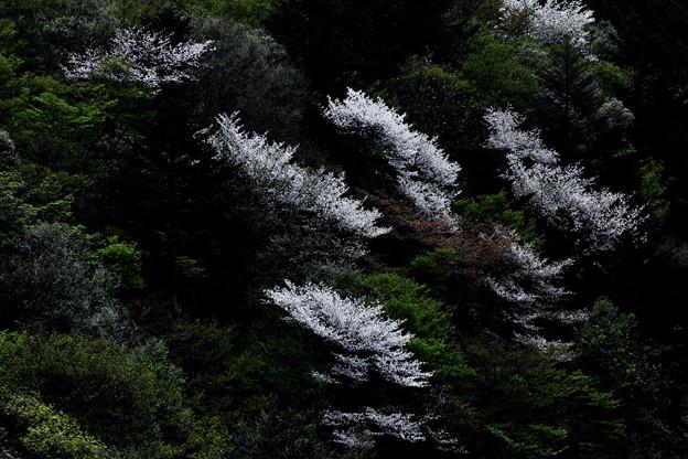 山間の咲く