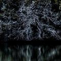 Photos: 白い木