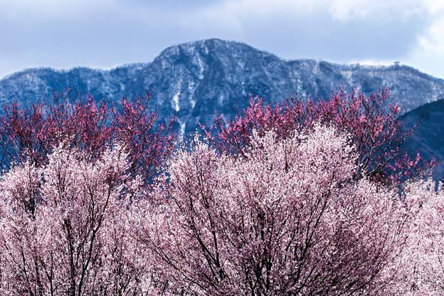 残雪残る春