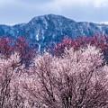 Photos: 残雪残る春