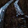 朽ちた木道