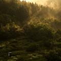 Photos: 山の朝