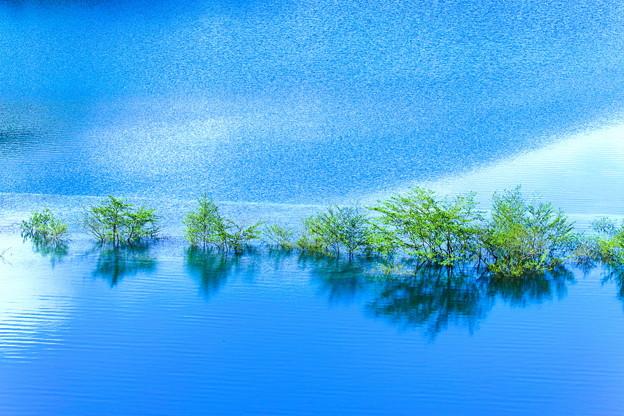 涼しき湖上