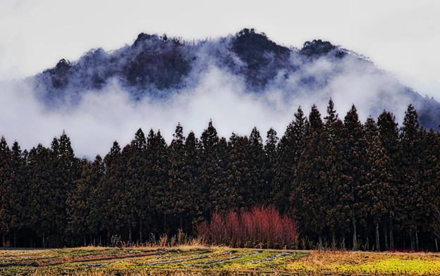 里山・霧湧く