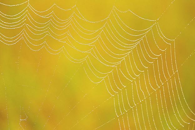 Photos: 糸