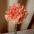 写真: カーネーション(オレンジにピンクの絞り)