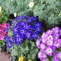 写真: 早春の花ー3