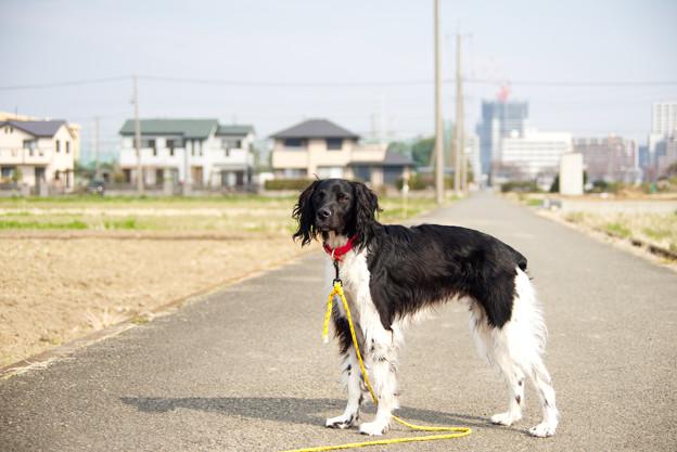 Photos: 散歩にて