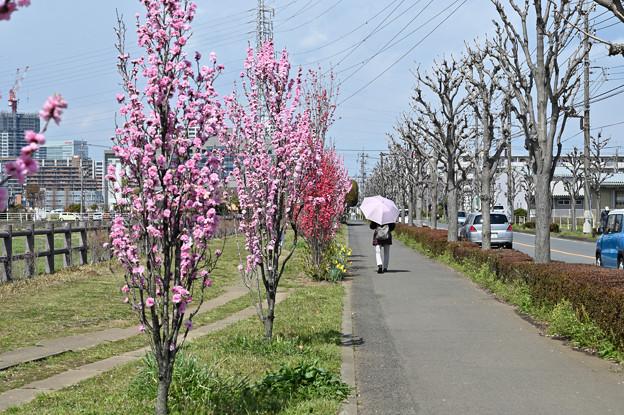 散歩にて ~ 道