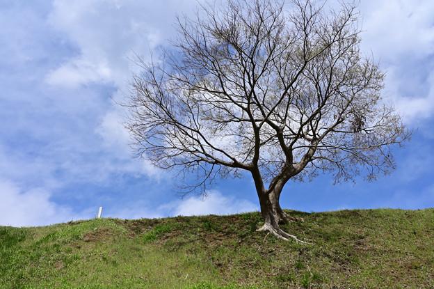 散歩にて ~ 木