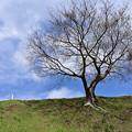 Photos: 散歩にて ~ 木