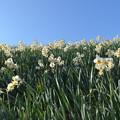 写真: 光る花